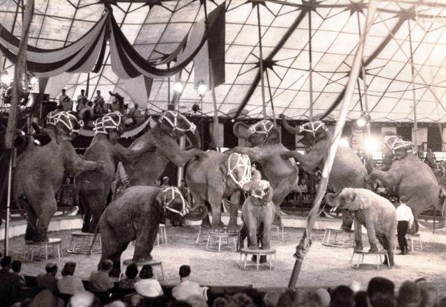 circus williams