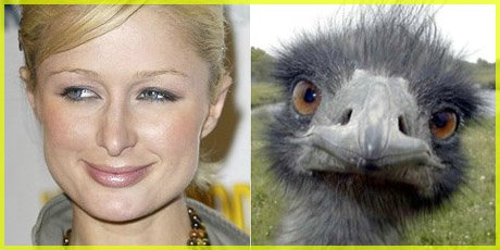 Paris Hilton comparison to an Ostrich
