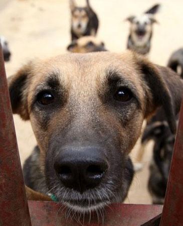 Cane al canile che tenta di farsi adottare