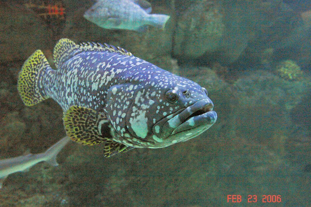 Scott aquarium omaha ne for The fish omaha