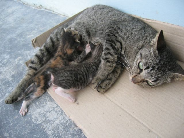 mother cat with her kittens