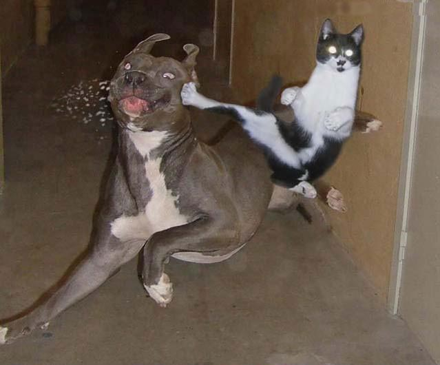 Fighting like Cat & Dog