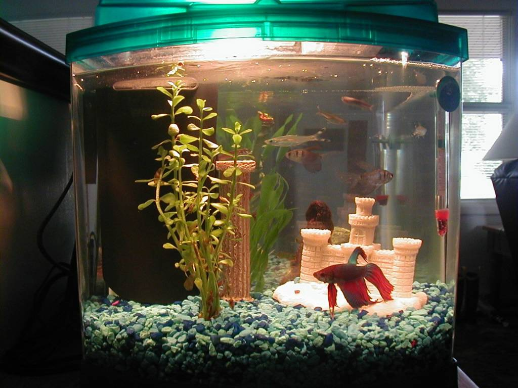 Theodicy aqua the betta fish for Aquarium decoration sealant