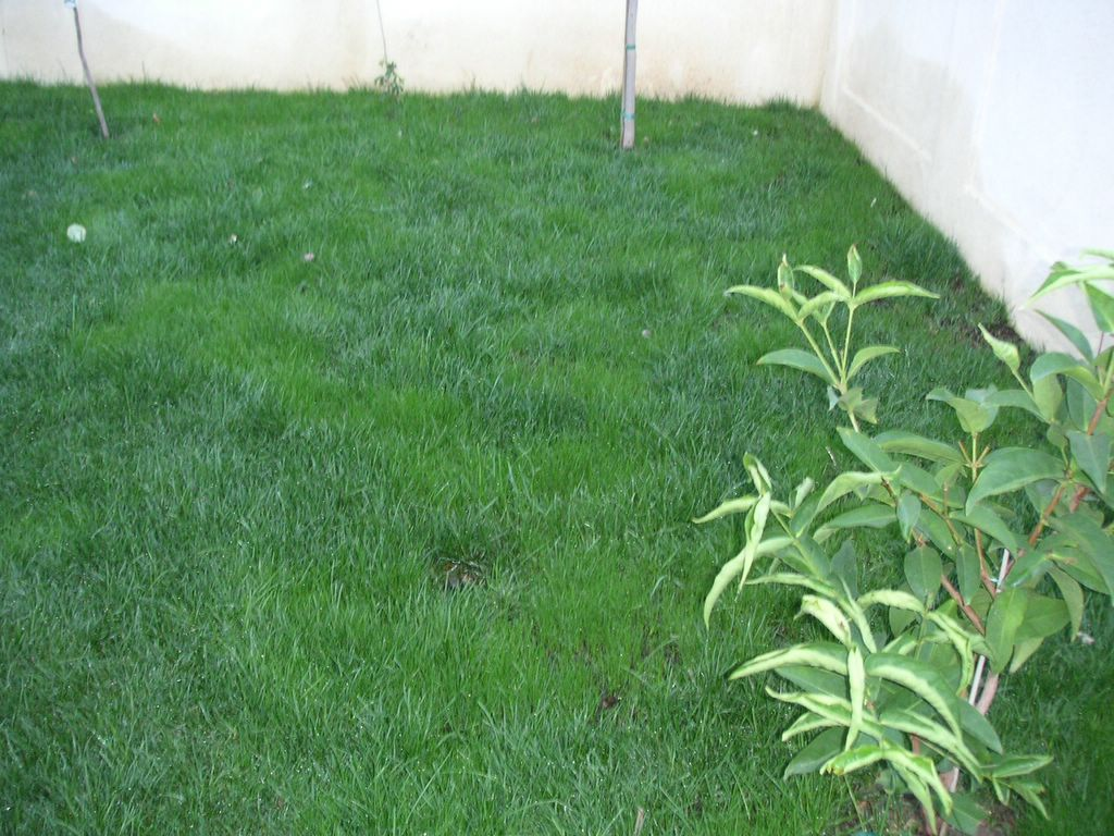 amateur gardening bytes l u0027s garden checkpoint 7 13 weeks later