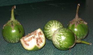 Lustrous globes of Thai eggplant