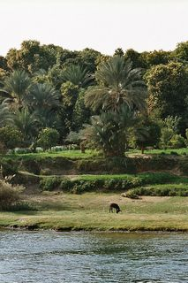 Nile flood plain.