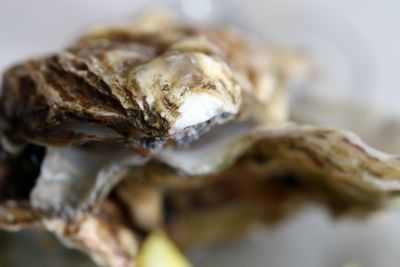 photograph picture  of cornish oysters from fowey, salcombe and helford, at the Old Passage Inn at Arlingham, Gloucestershire, England