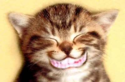 Laughing Cat Picture