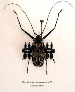 banksy's beetle