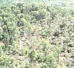 Russian Trees Fallen