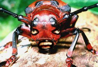 George W Bush Beetle: Agathidium bushi Miller and Wheeler