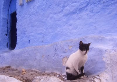 Cat in Chaouen, Morocco