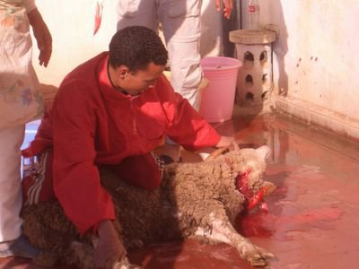 Aid Kbir 2006, sacrificing of the sheep