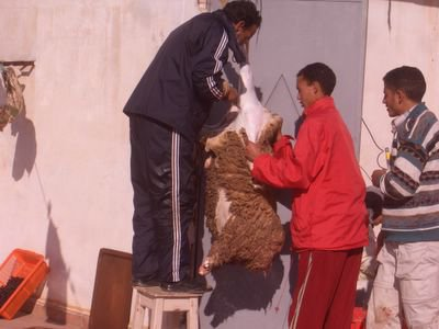 Aid Kbir 2006, skinning the sheep
