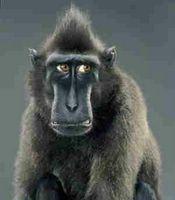 Worried Monkey