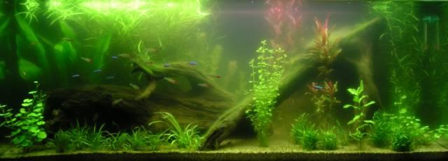Blog de mon aquarium: Eau trouble : fin !