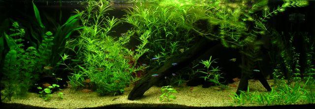 Avoir Un Aquarium blog de mon aquarium