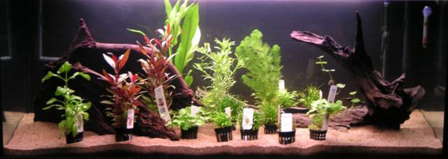 blog de mon aquarium d cor et plantation. Black Bedroom Furniture Sets. Home Design Ideas