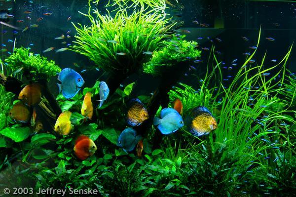 Blog de mon aquarium de l importance des plantes for Mini poisson aquarium