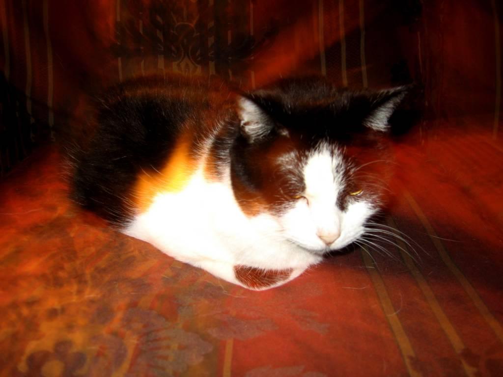 Cat Puked Up  Inch White Worm