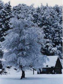 el lugar donde habita la dama de las nieves
