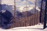Enchanted Forest at Chatter Creek Cat Skiing