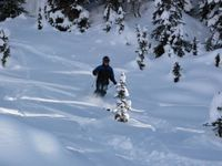 Skiing the glades on the East Ridge at Chatter Creek