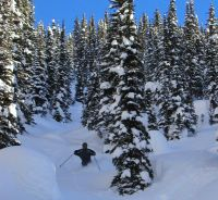 Tree Skiing at Chatter Creek Cat Skiing