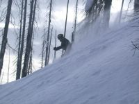 Tree Skiing in an Old Burn on East Ridge at Chatter Creek Cat Skiing
