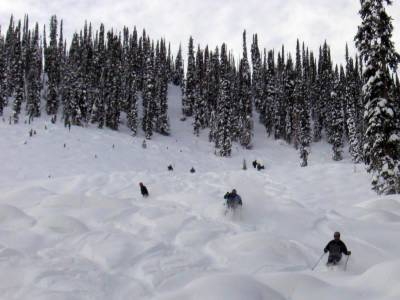 Powder Skiing on the Cut Blocks