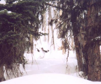 Tree Skiing at Chatter Creek Cat Skiing