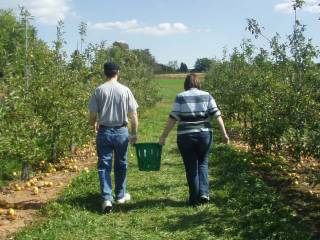 Apple picking! Why pay less for better apples at the store when you can go out for yourself, nearly kill yourself climbing trees, and pay much more? Because it's fun!
