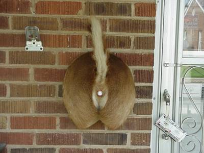 Redneck Doorbell
