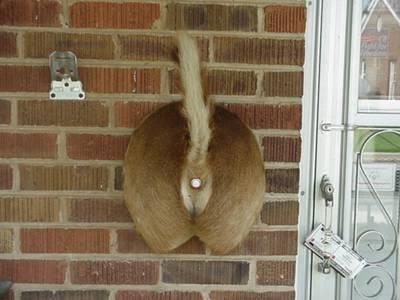 Redneck Doorbell