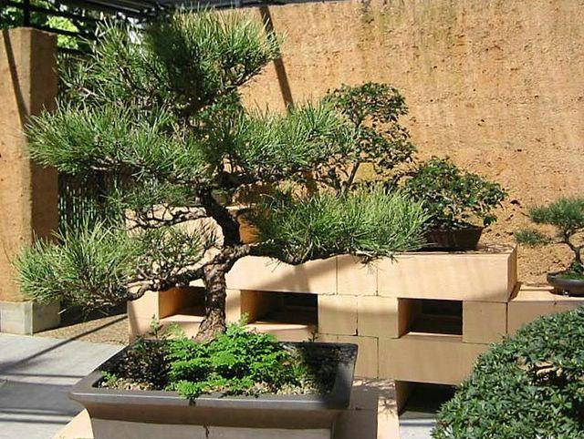 Japanese Garden Bonsai Landscaping Ideas New Zealand