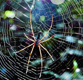 Spider Web Weave