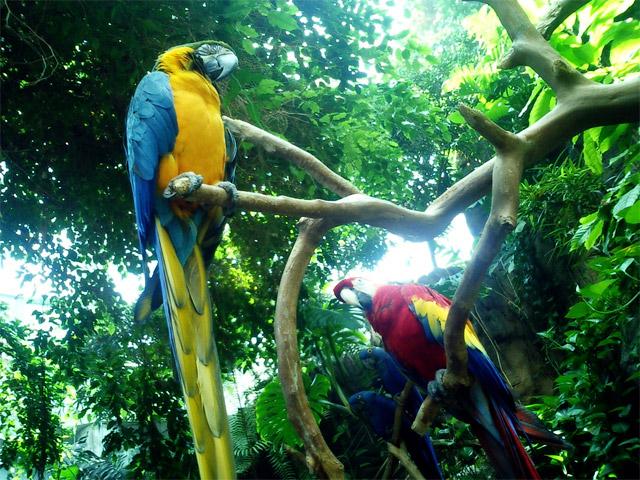 A exploração desordenada de recursos naturais na comunidade quilombola de tambai açú 6