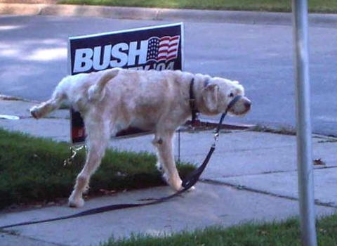 dog urinating on Bush campaign sign
