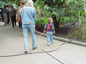 Image result for kid on a leash