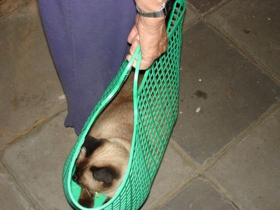 Her Ladyship carried home in a basket
