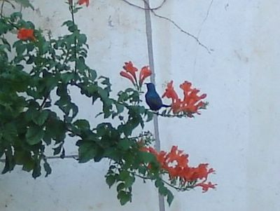 Palestine Sunbird taking a break