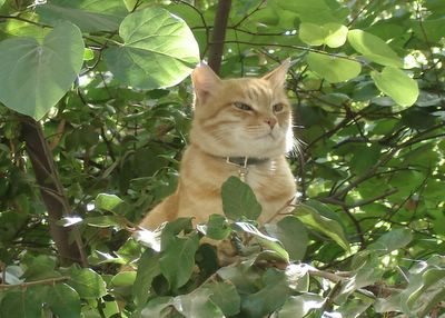 Mr. Neighborcat among the trees