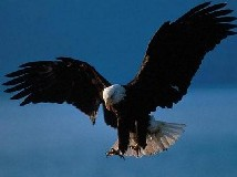 The American Eagle Will Always Prevail