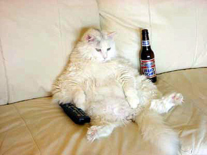 Photo: Couch Potato Cat