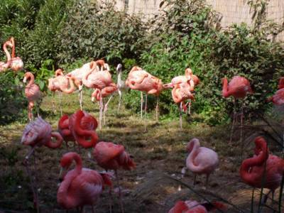 Cool pink flamingoes
