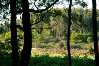 Foto retirada do Dias com Árvores