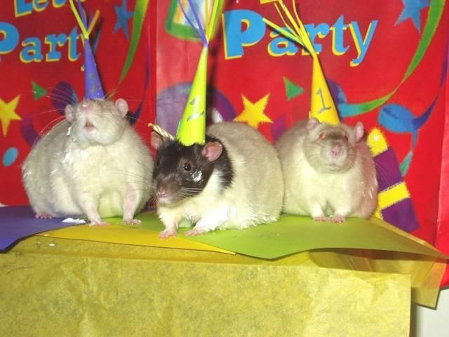 Image result for rat birthday cake