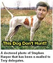 Hound Harper won't hunt