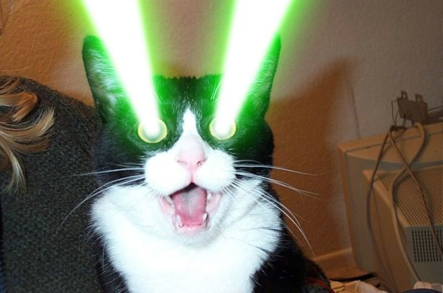 Cats Lasers Gif