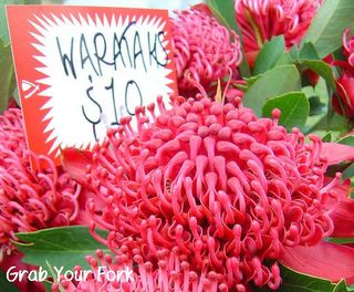 Waratah flowers